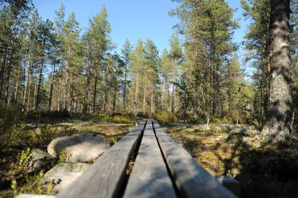 Pitkospuut Lauhanvuoren kansallispuistossa.