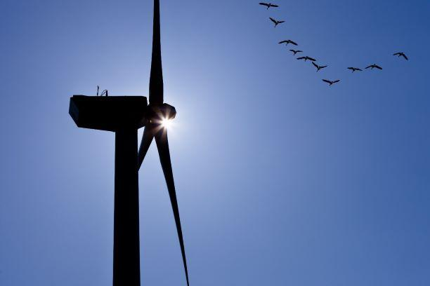 Tuulivoimala, jonka ohi lentää lintuparvi.