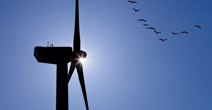 Tuulimylly ja kurkiaura sinistä taivasta vasten