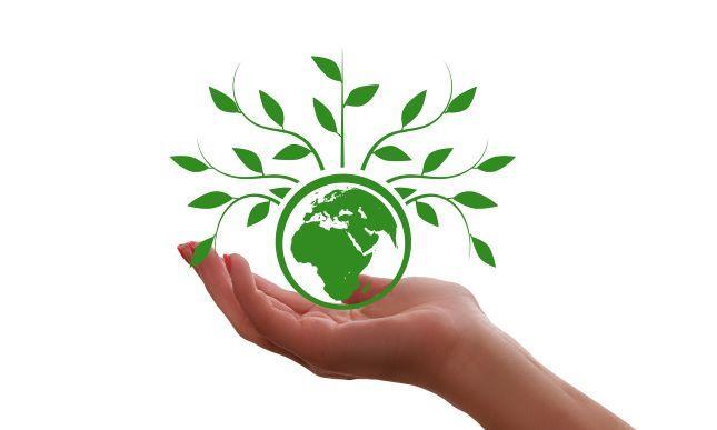 Käsi, joka pitelee maapallosta kasvavaa puuta.
